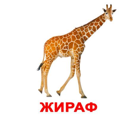"""Ламинированные карточки Домана """"Дикие животные """" на рус."""