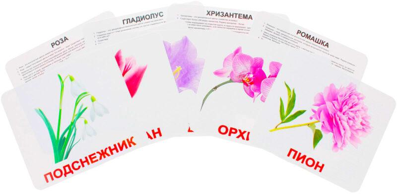 """Купить Подарочный набор карточек Домана """"Цветы"""" большие с фактами,ламинированные.Раннее развитие по методике Глена Домана"""