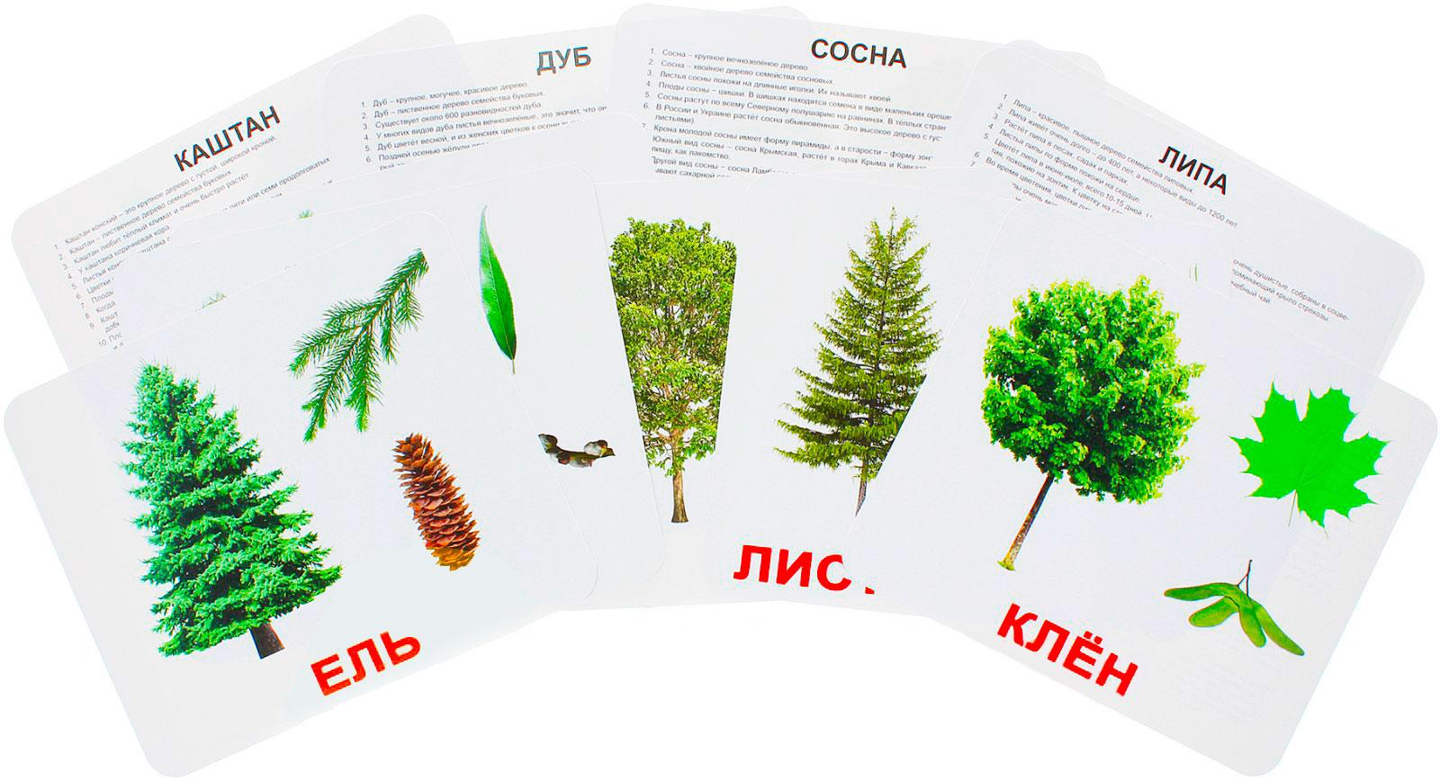 """Купить Подарочный набор карточек Домана """"Деревья"""" большие с фактами,ламинированные.Раннее развитие по методике Глена Домана"""