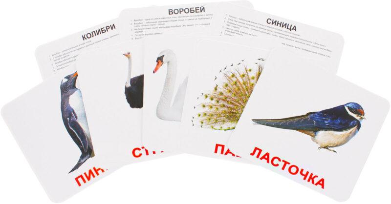 """Купить Подарочный набор карточек Домана """"Птицы"""" большие с фактами,ламинированные.Раннее развитие по методике Глена Домана"""