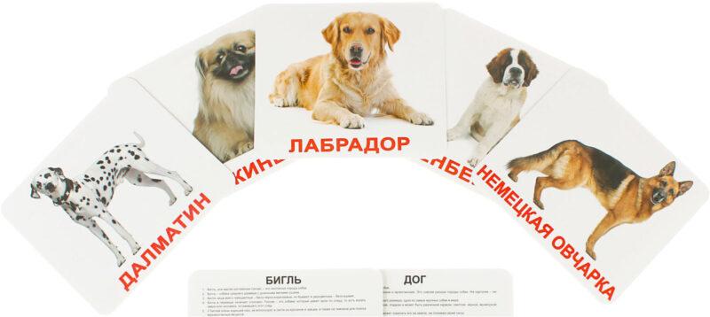 """Купить Подарочный набор карточек Домана """"""""Породы собак большие с фактами """" ламинированные.Раннее развитие по методике Глена Домана"""