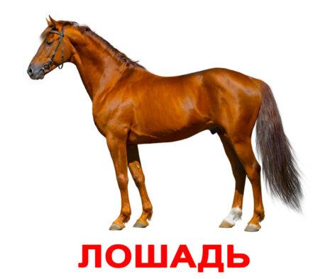 Карточки домана Домашние животные - лошадь . Вундеркинд с пеленок