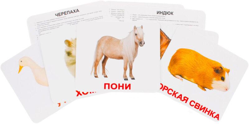 """Купить развивающие карточки Домана """"Домашние животные"""" , по методике Глена Домана. Производитель"""