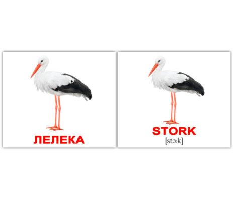 """Міні-картки Домана """"Birds/Птахи"""" укр/англ."""