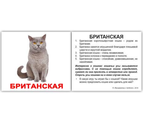 """Мини-карточки Домана """"Породы кошек""""с фактами на рус."""