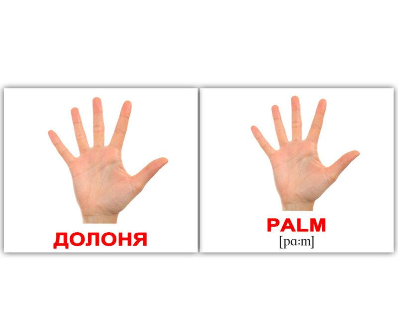 """Міні-картки Домана """"Human/Людина"""" укр/англ."""