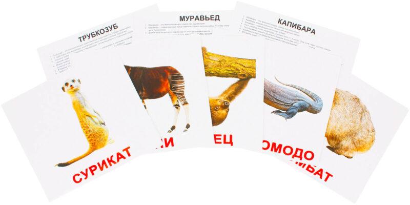 """Ламинированные карточки Домана """"Экзотические животные"""" на рус."""