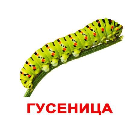 """Ламинированные карточки Домана """"Насекомые"""" на рус."""