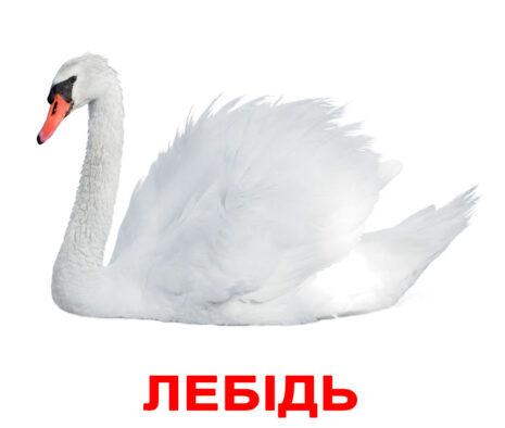 """Ламіновані картки Домана """"Птахи"""" українською"""