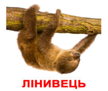 """Ламіновані картки Домана """"Екзотичні тварини"""" українською"""