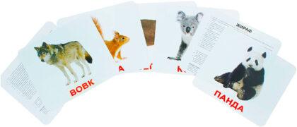 Купити Подарунковий набір карток Домана «Дикі тварини» великі з фактами , ламіновані.Ранній розвиток за методикою Глена Домана