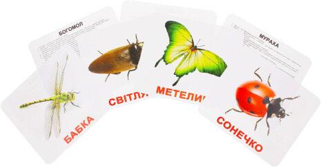 Купити Подарунковий набір карток Домана «Комахи» великі з фактами, ламіновані.Ранній розвиток за методикою Глена Домана