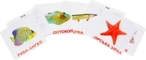 Купити Подарунковий набір карток Домана «Мешканці водойм» великі з фактами , ламіновані.Ранній розвиток за методикою Глена Домана