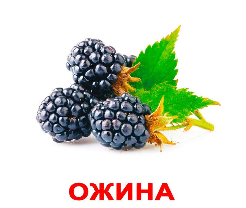 """Ламіновані картки Домана """"Ягоди"""" українською"""