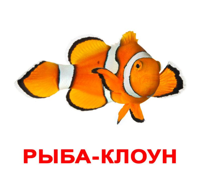 """Ламинированные карточки Домана """"Обитатели воды"""" на рус."""