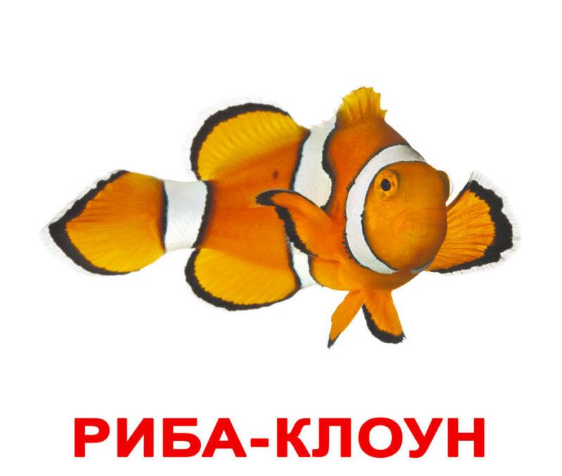 """Ламіновані картки Домана """"Мешканці водойм"""" українською"""
