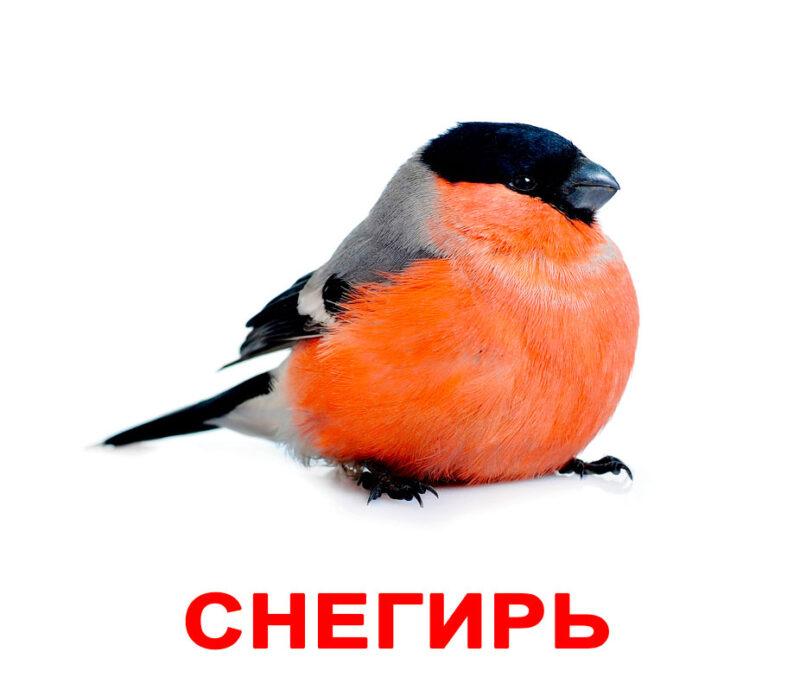 """Ламинированные карточки Домана """"Мои первые знания"""" на рус."""