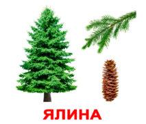 """Ламіновані картки Домана """"Дерева"""" українською"""
